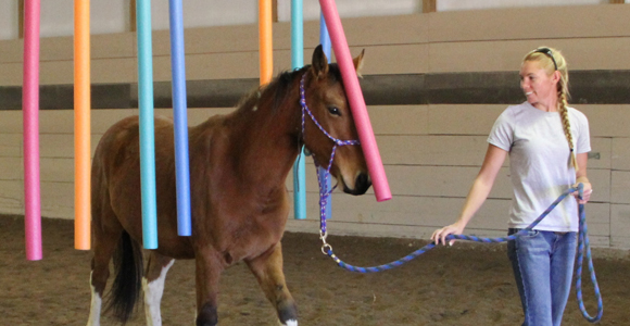 See horses lean to naviage obstacle courses