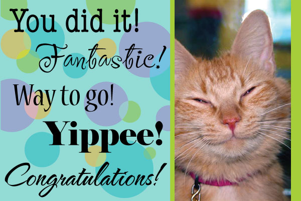 Image result for congratulations cats